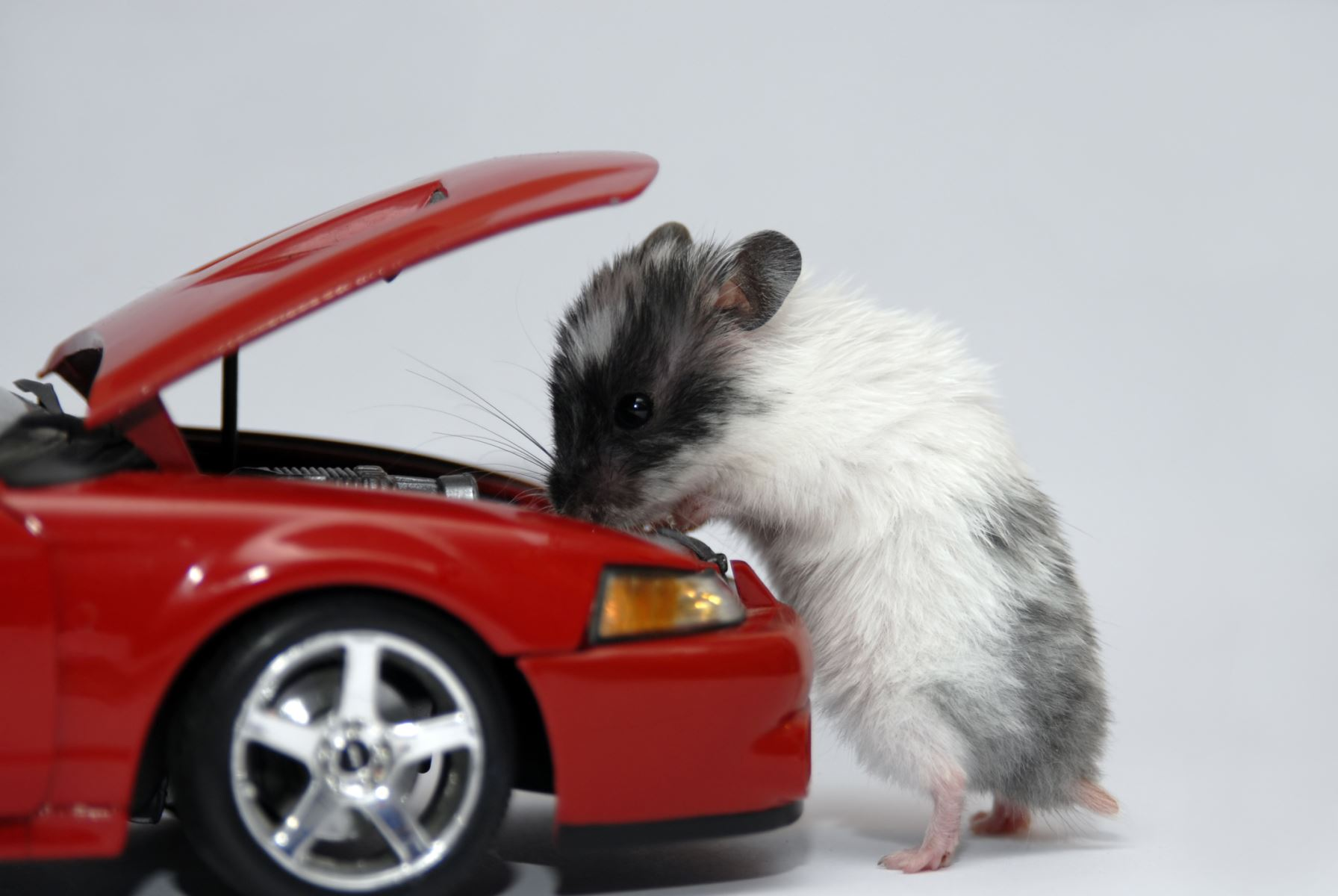 Mice can do significant damage to autos